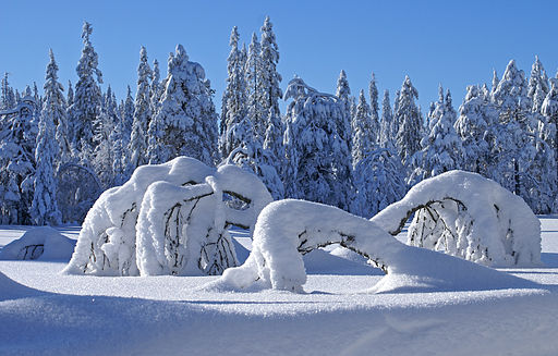 Winter_scene_(3277481706)