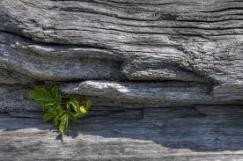 log and plant