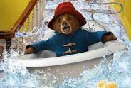Paddington Bear - 3
